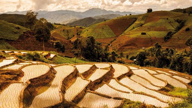 Rizieres de Thaïlande